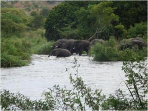 Elephants in Nimule Park