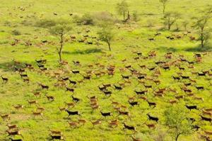 15 Day Safari To The Great Migration Tour