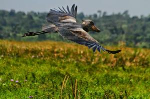 10 Day Birdwatching Safari Tour